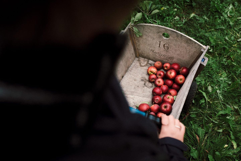 Äpfel auf dem Herzapfelhof