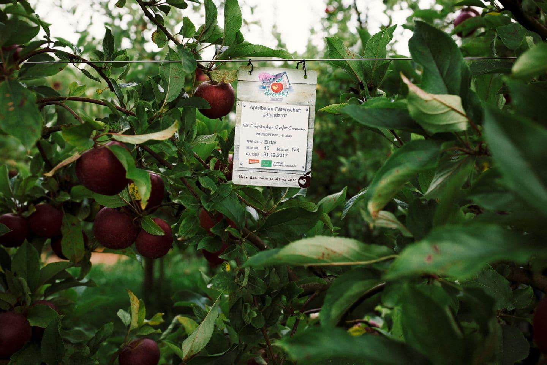 Schild mit Apfelbaum Patenschaft